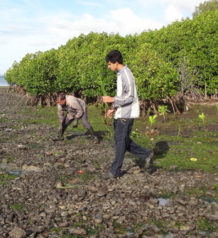 Launching the Mangroves Propagation project