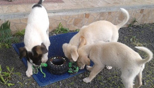 20150310-puppies-at-the-shelter