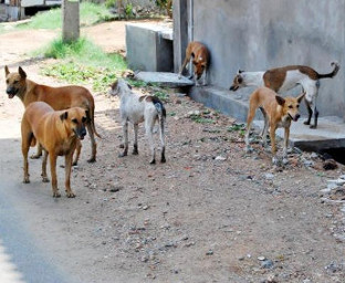 20150310-stray-dogs-in-mauritius