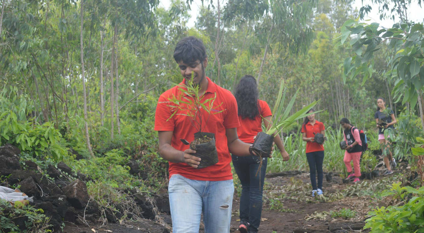 20150712-volunteers-planting-in-forest