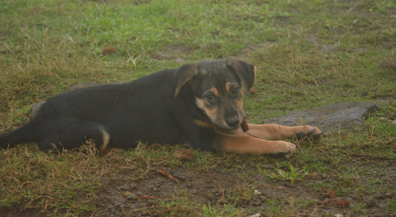 20150726-puppy-on-grass-wooff