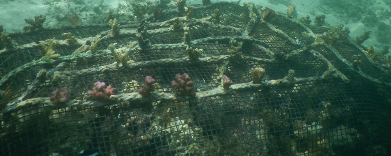 20150726-coral-farming-in-trou-aux-biches